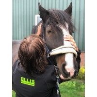 ELLIS Paardenmassage